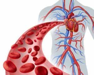 Bremer-Therapue - Blutkörper